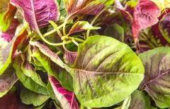 Ăn 6 loại rau này có hàm lượng canxi cao hơn sữa, lại không sử dụng thuốc trừ sâu, nên ăn vào mùa hè