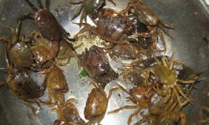 Chuyên gia Đông y cảnh báo về việc ăn cua đồng giải nhiệt ngày hè, cẩn trọng kẻo ngộ độc